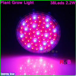 Wholesale Blue Led House Light Bulb - E27 RED and BLUE 38 LEDs Hydroponic Green House Flower Garden Light LED Plant Grow Growth Light Bulb Lamp Widely Use