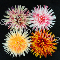 Wedding spider mum flower - Inch Spider MUM flowers daisy flowers hair clips With Pin Brooch colors mixed