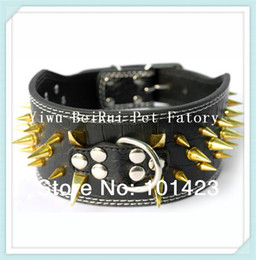 Wholesale 3inch Dog Collars - Wholesale-(20 pieces lot) Berry 3inch Width Strong Leather Gold Spikes Dog Collar Medium