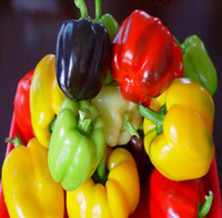Wholesale Bell Pepper Plants - wholesale and retail balcony vegetable Colourful bell pepper seeds Vegetable Seed Spicy 30 pcs   One Pack garden planting chili