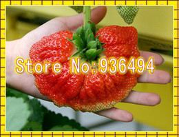 200 PCS Big Palm Strawberry Seeds, graines de fruits très délicieuses, plantes rares au Canada