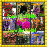 сорта роз оптовых-Вьющиеся растения, китайские семена цветов, вьющиеся розы семена 1 лот 450 шт, 9 шт разнообразие, каждый из сорта 50 шт