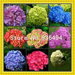Spedizione gratuita, Nove specie 180 PC Germania semi di ortensie, piante bonsai, semi di fiori da rose gialle semi fornitori