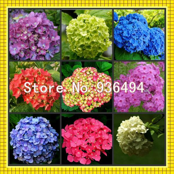 Free shipping, Nine species 180 PC Germany hydrangea seeds, bonsai plants, flower seeds