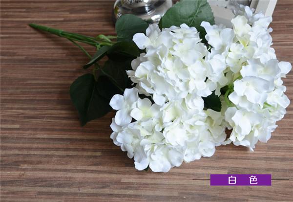 White color hydrangea