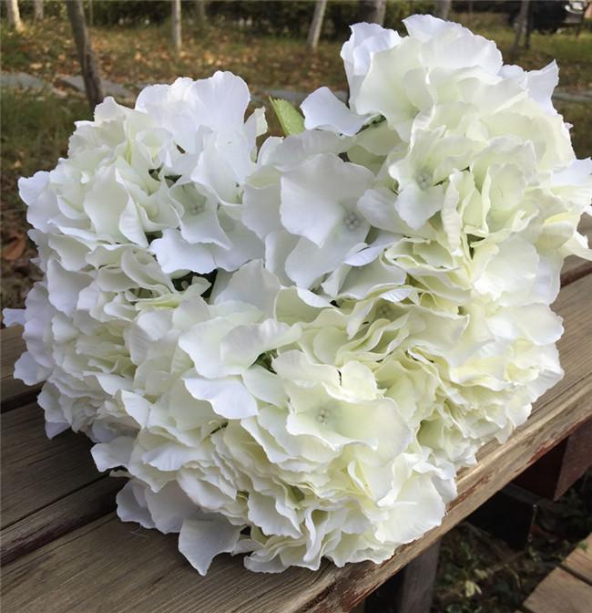 Cream Color Hydrangea