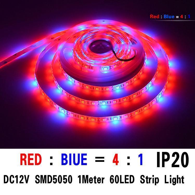 SMD5050 4red / 1bule 1M 60 개의 LED IP20