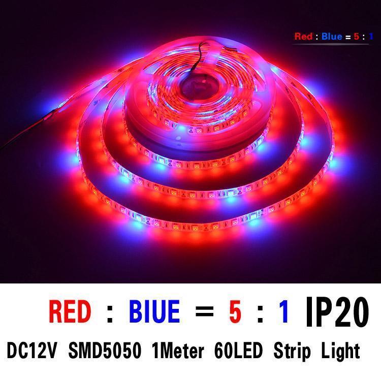 SMD5050 5red / 1bule 1M 60 개의 LED IP20