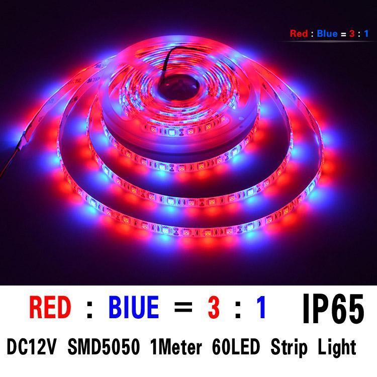 SMD5050 3red / 1bule 1M 60 개의 LED IP65