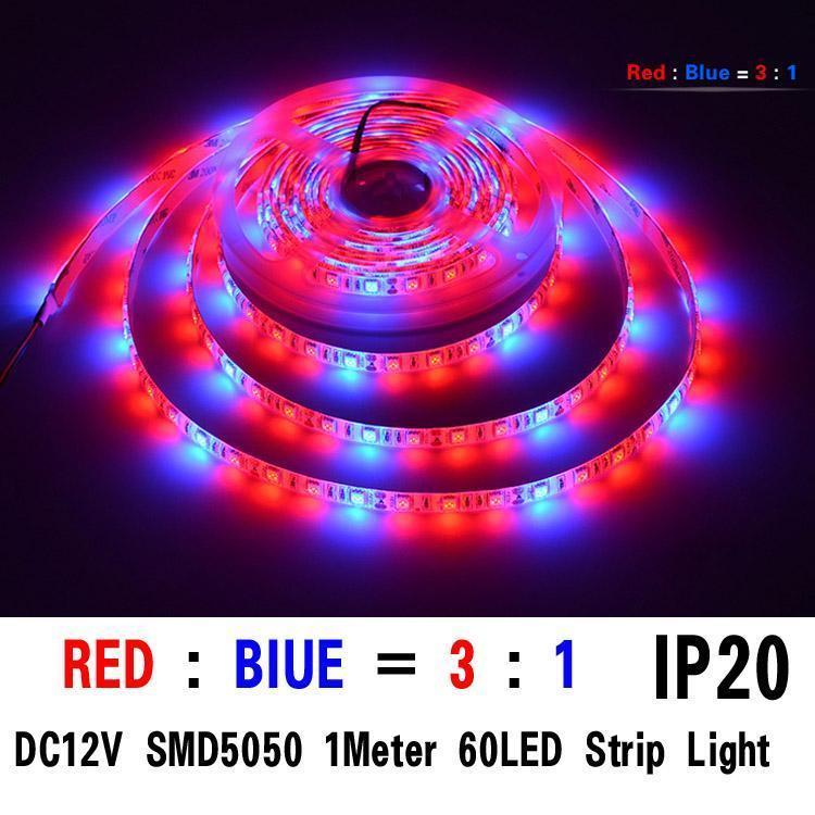 SMD5050 3red/1bule 1M 60 leds ip20