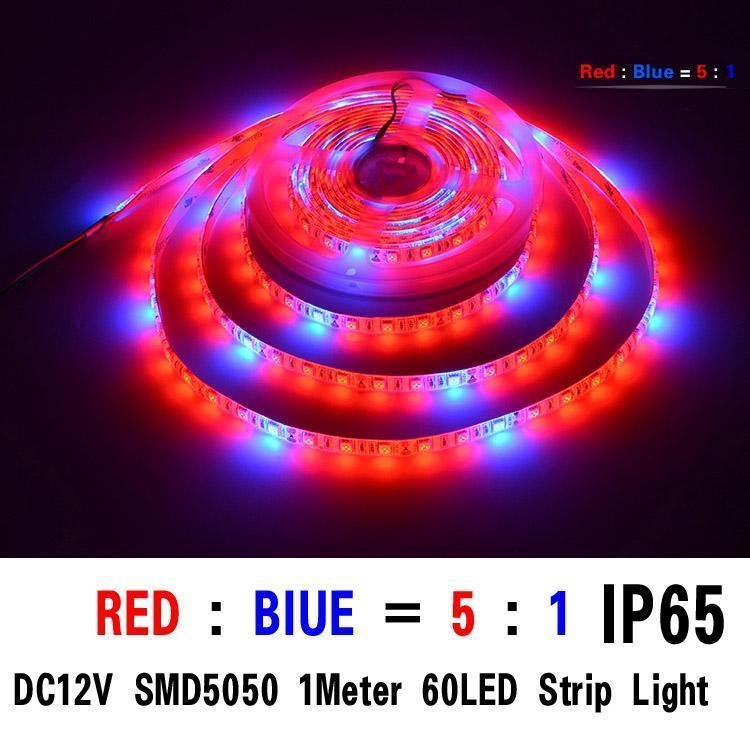 SMD5050 5red/1bule 1M 60 leds ip65
