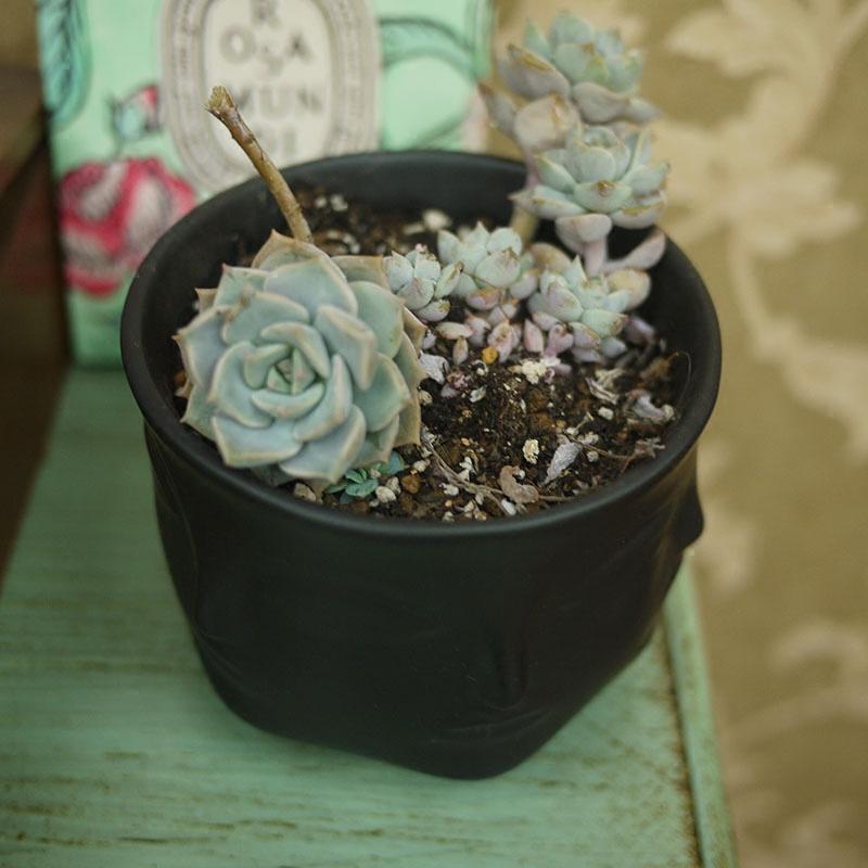 Jonathan Adler Dora Maar Musa Vase flower pots planters Muse Noir Dora Maar salad bowl