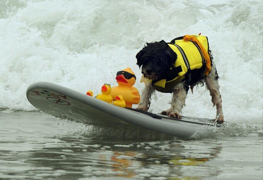Pequeño perro mascota chaleco salvavidas ropa de seguridad para surfear chaleco de natación perro de verano cachorro traje de baño playa vacaciones toro Pug xxxxl