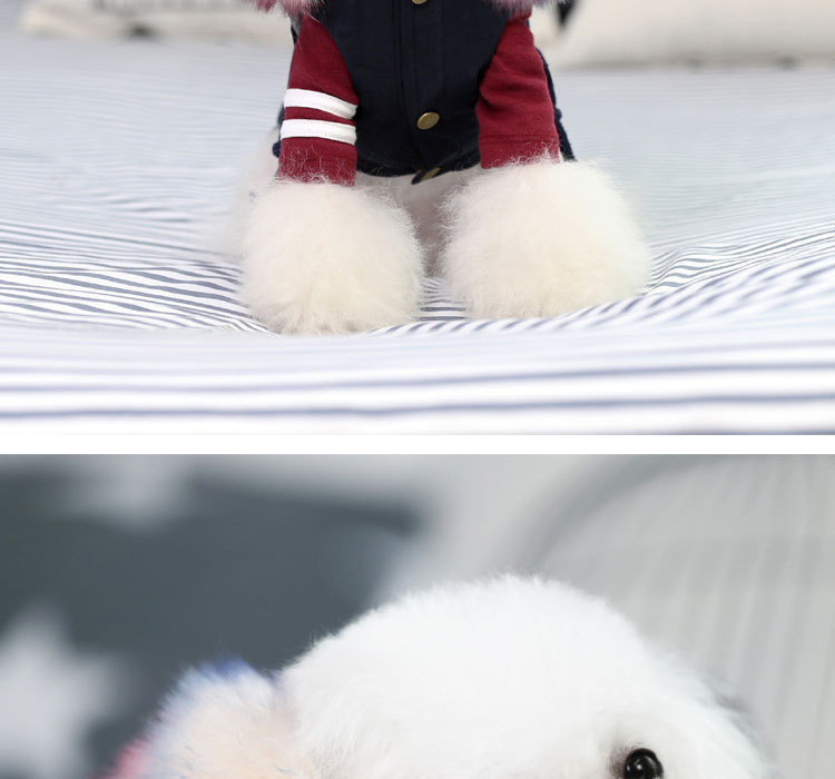 Luxury Dog Clothes (5)