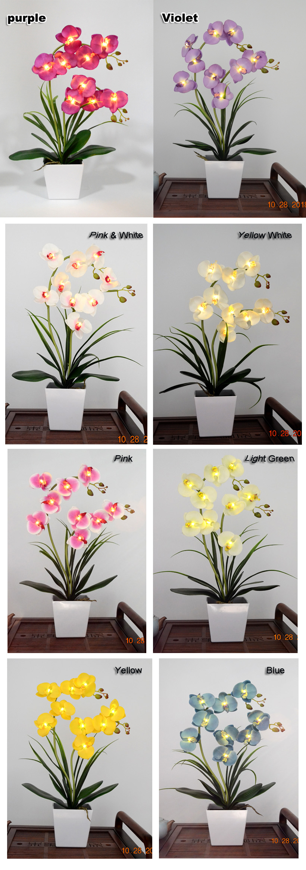 9 Orchid Flower Light Color