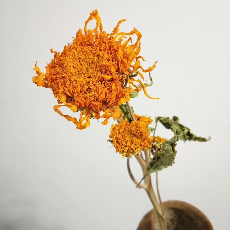 6 Stücke Natürliche Trockenblumen echte getrocknete Blüten Sonnenblume