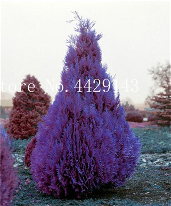 75134-02-BAKIE_20170222102754