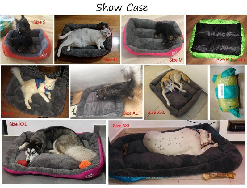 dog bed show
