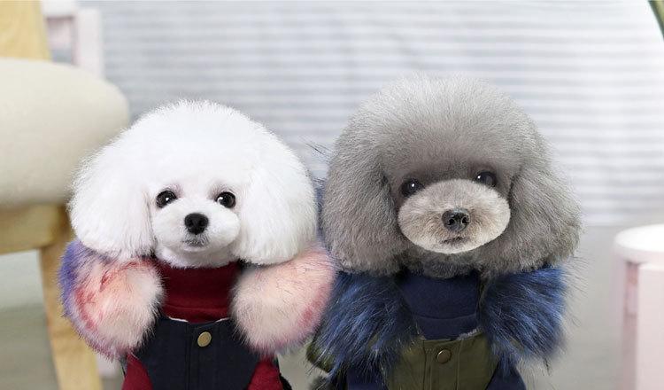 Luxury Dog Clothes (1)