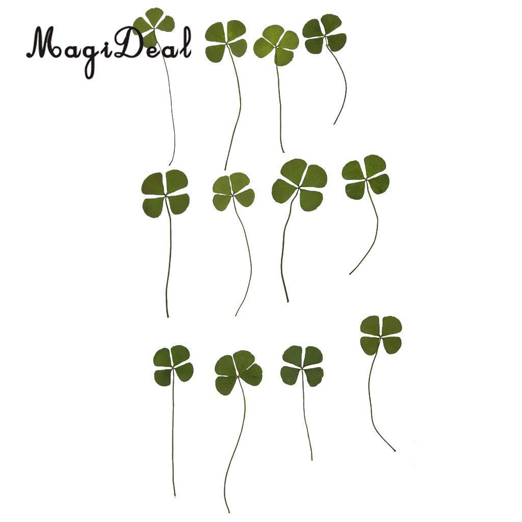 MagiDeal 12 Real Pred Four Leaves Embellishments Card Making Scrapbooking Jewelry Furniture Decorating DIY Accories Design