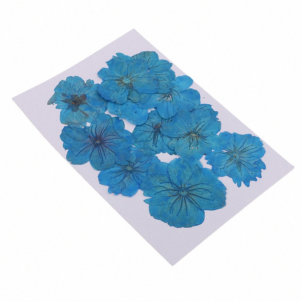 Nail DIY Hng Kiang Hu 63 PCS Natural Dried Pressed Flowers for Crafts Scrapbooking Painting Art Preserved Flower 13 Types