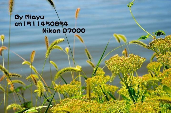 original_PGJj_134500003bb91191_conew1