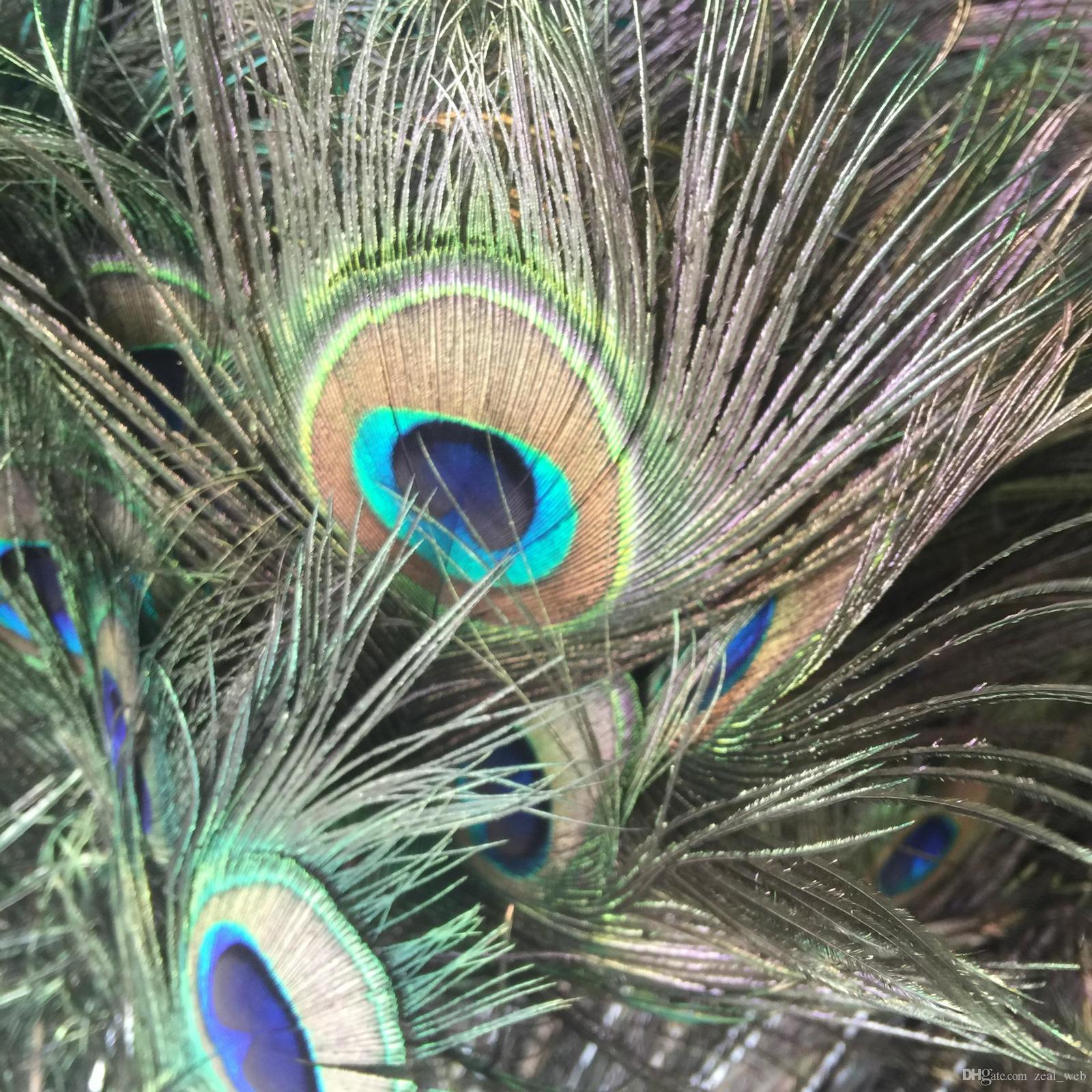 DHL & SF EXPRESS Natural Peacock Feathers Elegant Decorative Accessories Genuine Natural Peacock Feathers 25-30 CM Decoration