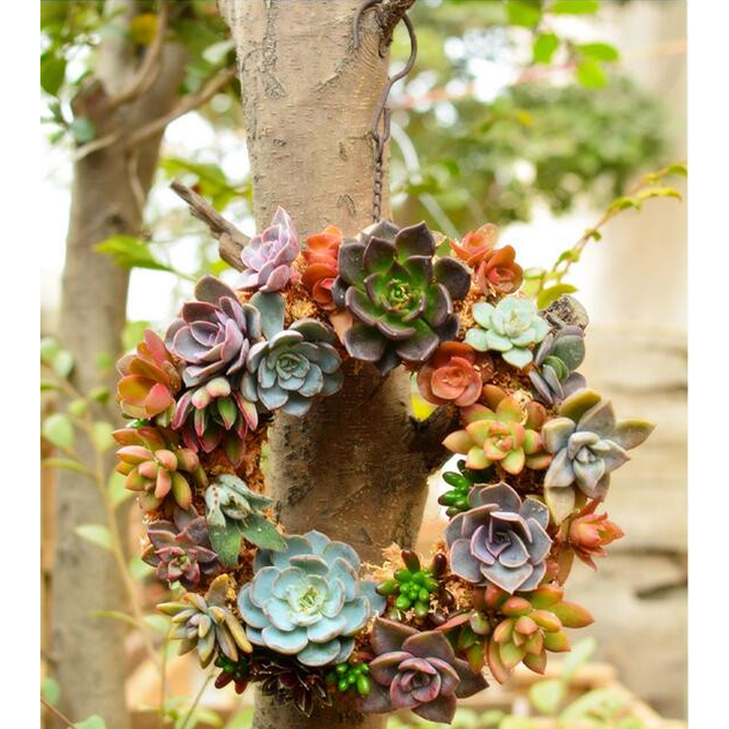 Rustic Iron Wire Wreath Frame Succulent Pot Iron Hanging Planter Plant Holder (Plants Are Not Included)