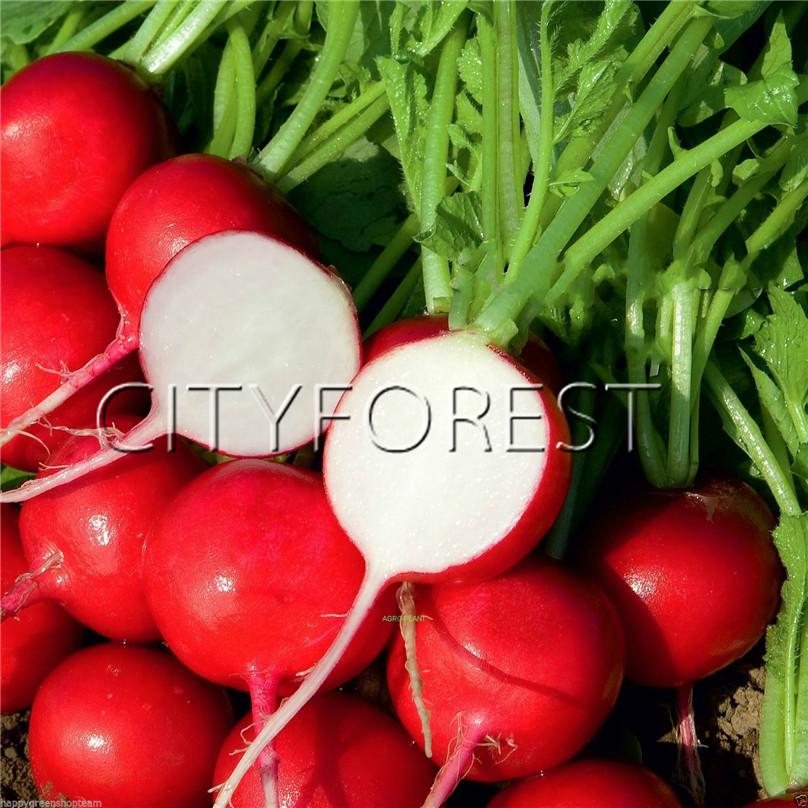 400 Watermelon Red Radish Seeds Delicious Vegetables very tasty crisp,Nice DIY Vegetables Gardeb