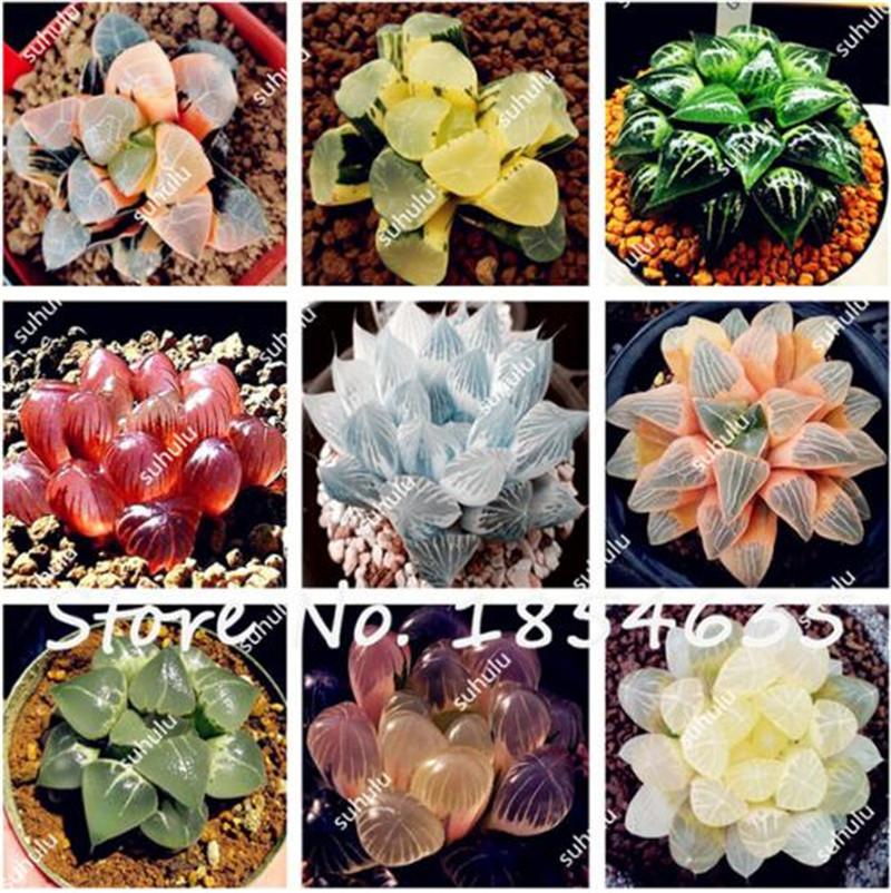 Indoor Succulent Planter Online Shopping Indoor Succulent
