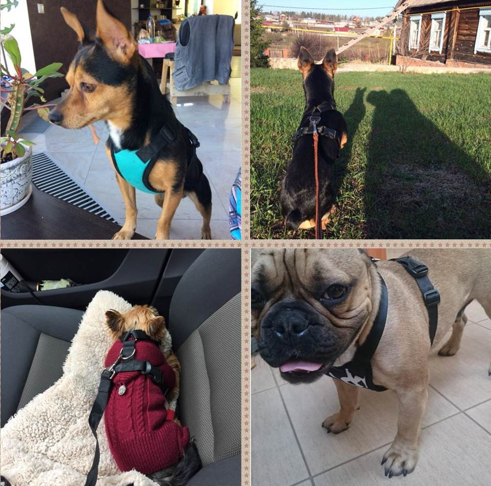 TAILUP-Dog-harnesses-travel-accessories-Vehicle-dog-harness-vest-for-small-large-dogs-seat-safety (5)