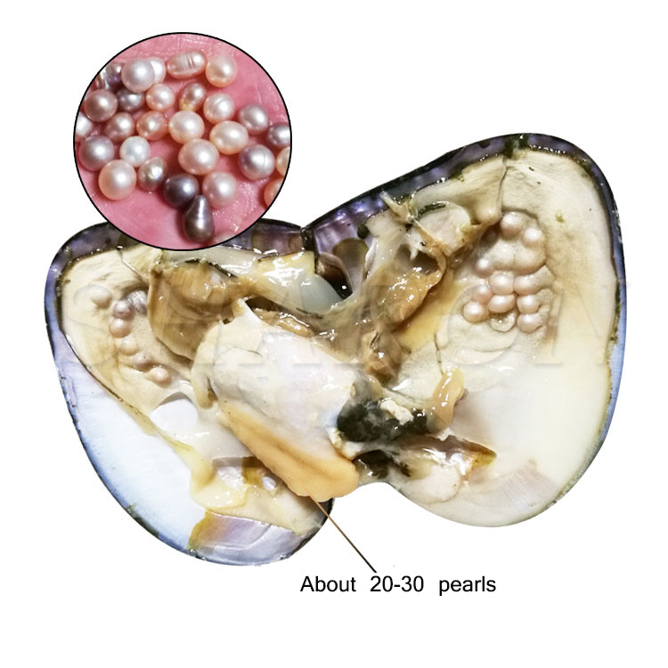 2018 Wholesale Big Oyster Pearl Five years aquaculture 20-30 pcs pearls Individually Vacuum Packed Cultured Fresh Oyster Pearl Farm Supply