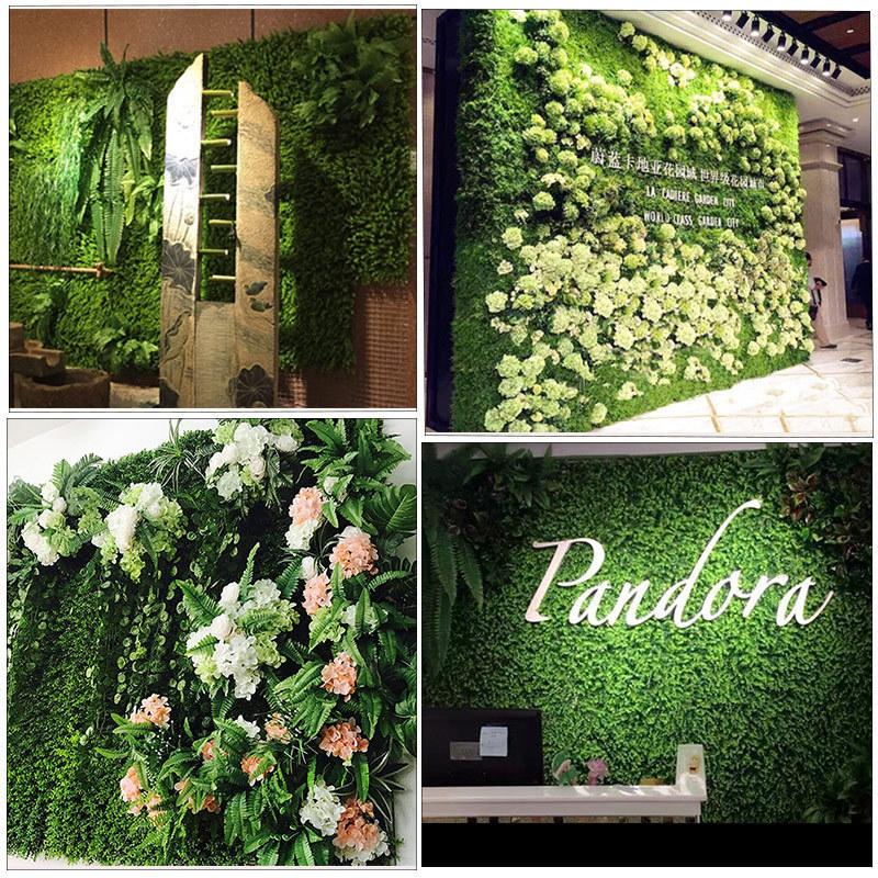 50PCs-Seeds-Evergreen-Ornamental-Boxwood-Shrub-Green-Tree-Home-Garden-Plants