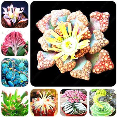 DHgate coupon: 100 pcs/bag Mix lithops seeds rare succulent seeds Pseudotruncatella Living Stone bonsai mini garden plant Radiation Absorption