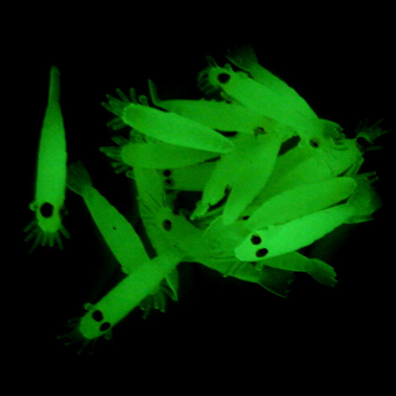 glow in dark fishing lures