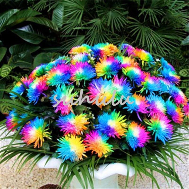 9 Farben Schöne Begonia Blumen Samen Blumen Topf Bonsai Garten Dekor