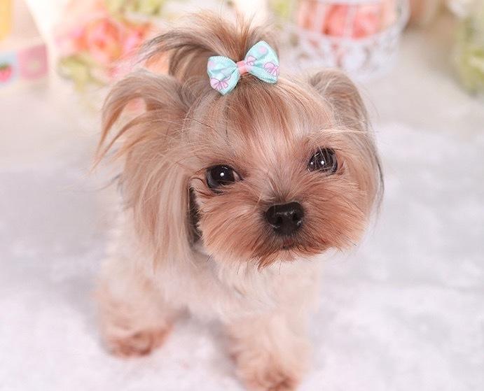 Bonito Pet Dog Cat Dog Grooming Suprimentos de Beleza Arcos Hairpin Pet Grampos de Cabelo Pet Shop Dog Hairband Acessorios