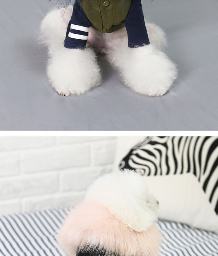 Luxury Dog Clothes (7)