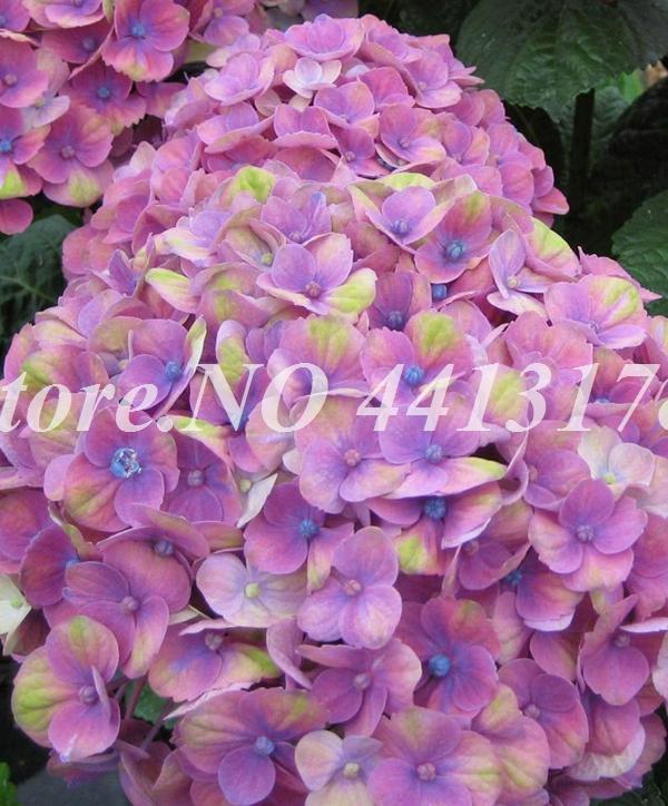 73310-02-BAKIE_20160315142519