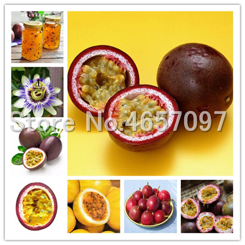 200 pcs Passion Fruit Bonsai Organic Passiflora Edulis Bonsai seeds Nutritious Rare Fruit Granadilla Garden Fruit Bonsai Easy to Grow