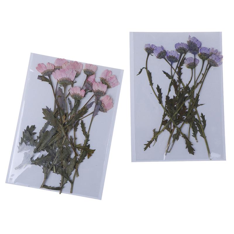 Viele 8Pcs Echt gepresste Blätter Getrocknete Blumen Scrapbooking Telefon