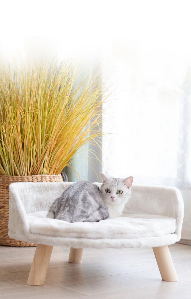 cat-sofa_27
