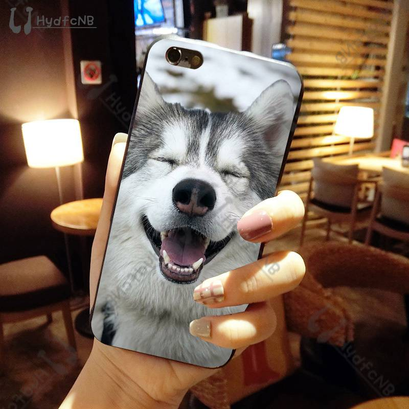Animal Wolf Husky Dog
