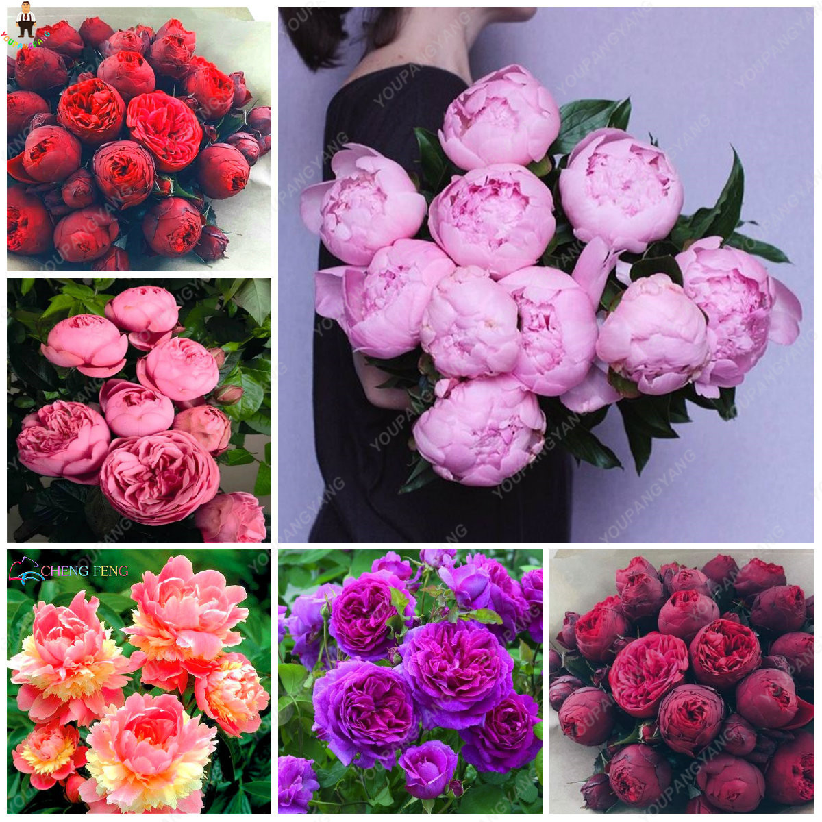 Compre 20 Unids Bonsai Rare Chinese Peony Plantación Verdor Flores Terraza Exterior Patio Flor De Paeonia Para El Hogar Jardín Decoración C19041601 A
