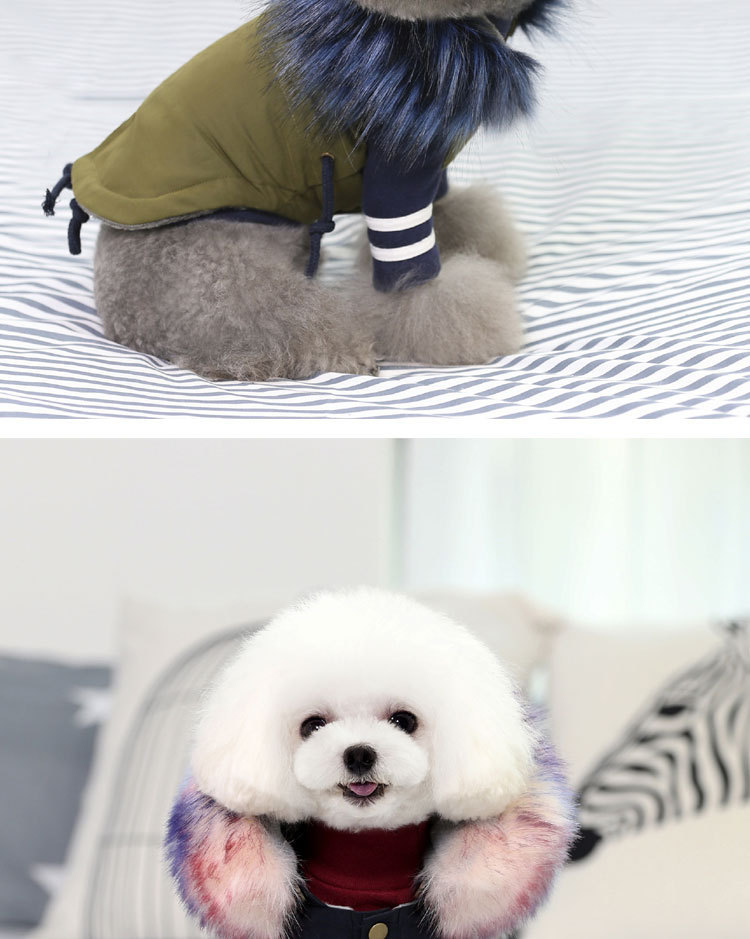 Luxury Dog Clothes (4)