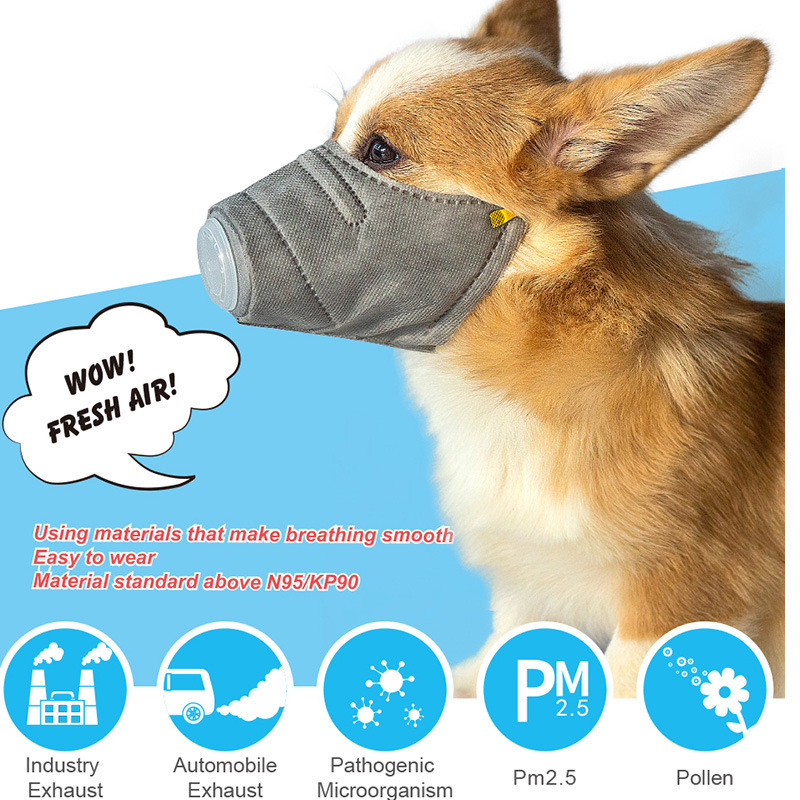 Free UK p//p Dog fridge magnets New Gift Bernese New