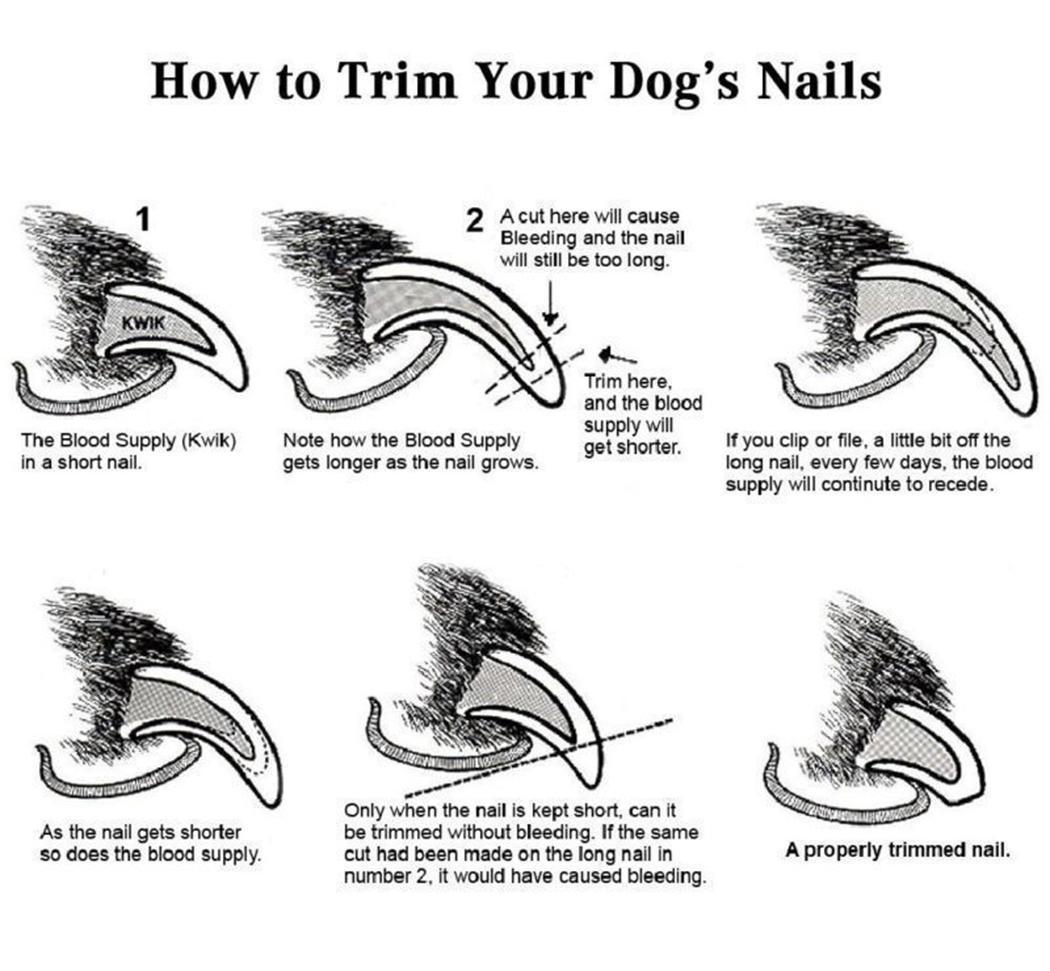 Новая мода Pet Dog Cat нержавеющей стали Профессиональный ногтей Toe Триммер Машинка для стрижки Уход Инструмент New Pet пилочка для ногтей
