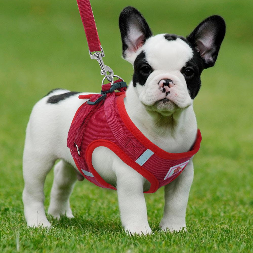Reflective Dog Vest Harness and Leash Set Breathable Nylon Small Dog Harness and Leads for Small Medium Dogs Cats