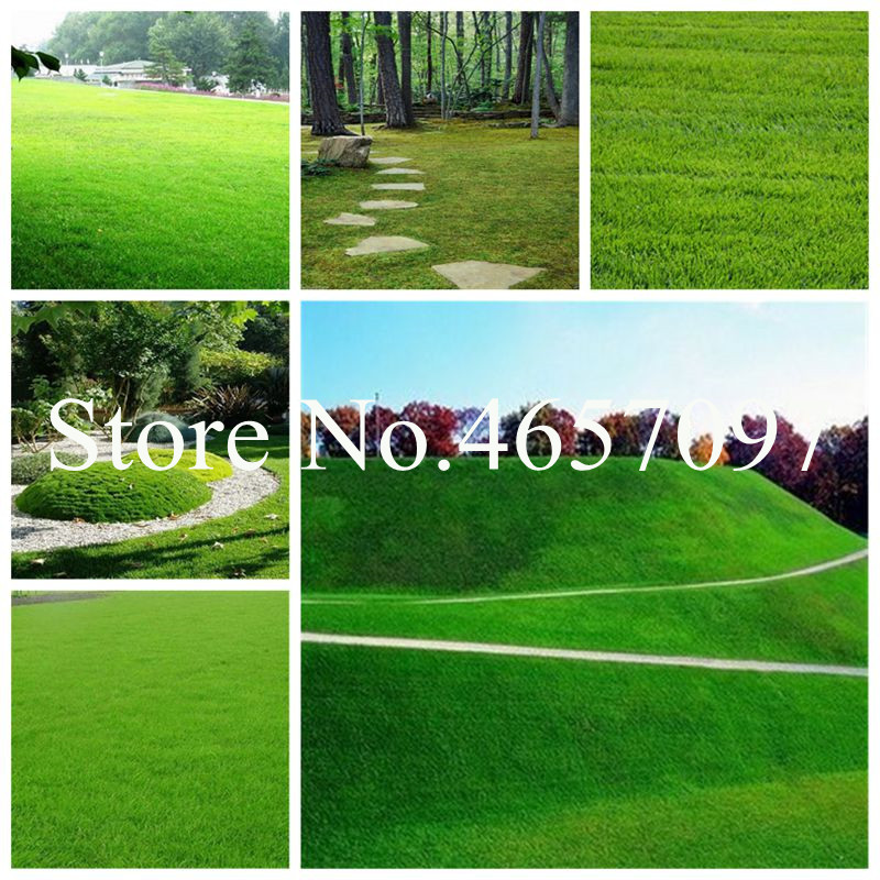 Big sale 1000 Pcs Mosquito Repelling Grass Bonsai Seeds Mosquito Bonsai Seeds