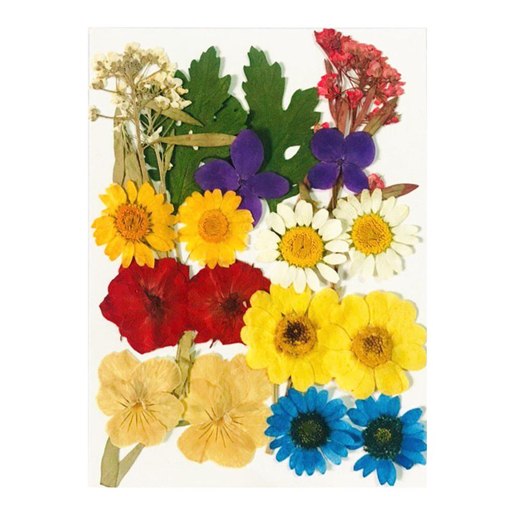 chiwanji 10x Flores Secas Prensadas Hojas De Helecho Flor Seca Flor De Bricolaje Arte Floral Decoraci/ón